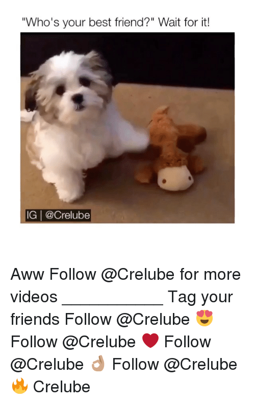 "awws: ""Who's your best friend?"" Wait for it!  IG 