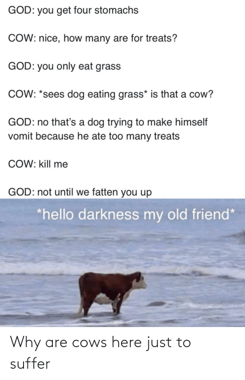 cows: Why are cows here just to suffer