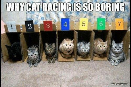 Memes, 🤖, and Cat: WHY CAT RACING IS SO BORING  5  4  7  WeknowMemes