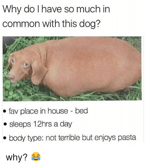 Memes, Common, and House: Why do Ihave so much in  common with this dog?  fav place in house-bed  . sleeps 12hrs a day  . body type: not terrible but enjoys pasta why? 😂