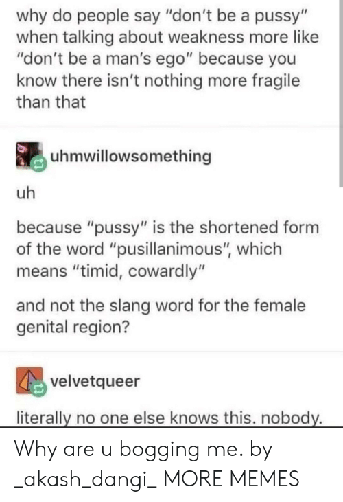 """A Pussy: why do people say """"don't be a pussy""""  when talking about weakness more like  """"don't be a man's ego"""" because you  know there isn't nothing more fragile  than that  uhmwillowsomething  uh  because """"pussy"""" is the shortened form  the word """"pusillanimous"""", which  means """"timid, cowardly""""  and not the slang word for the female  genital region?  velvetqueer  literally no one else knows this. nobody. Why are u bogging me. by _akash_dangi_ MORE MEMES"""