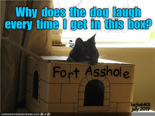 Time, Asshole, and Dog: Why does the dog laugh  every time I get in this box?  Fort Asshole  bajio6401  july 2019  ICANHASCHEE2EBURGER CoM