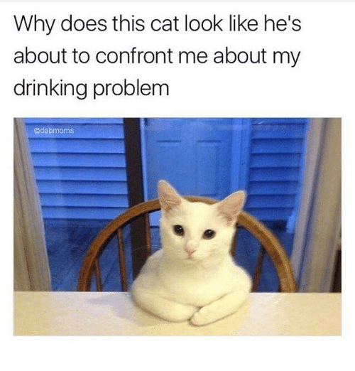 Cat Look: Why does this cat look like he's  about to confront me about my  drinking problem  Cadabmoms