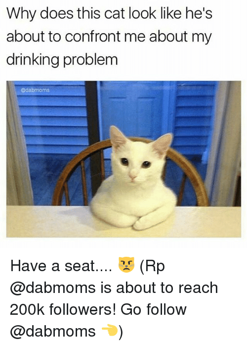 Cat Look: Why does this cat look like he's  about to confront me about my  drinking problem  @dabmoms Have a seat.... 😾 (Rp @dabmoms is about to reach 200k followers! Go follow @dabmoms 👈)