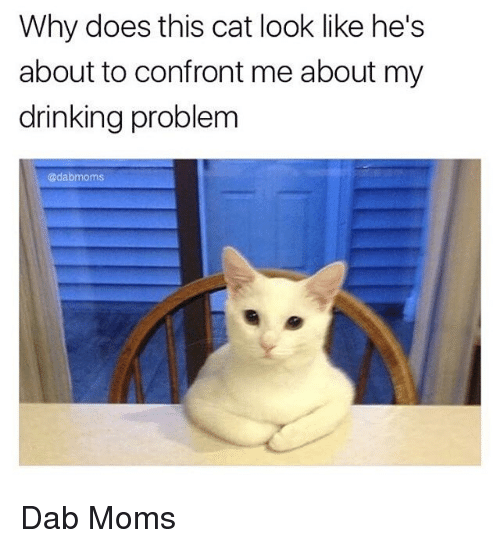 Cat Look: Why does this cat look like he's  about to confront me about my  drinking problem  odabmoms Dab Moms