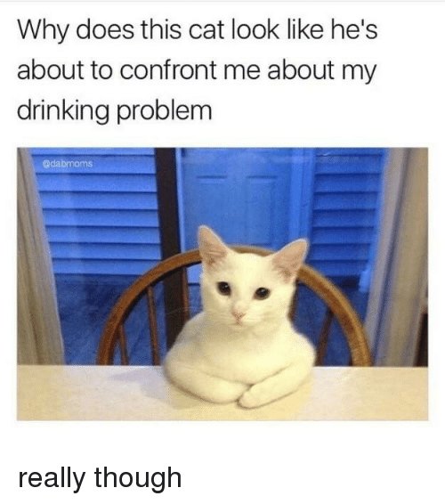 Cat Look: Why does this cat look like he's  about to confront me about my  drinking problem  @dabmoms really though
