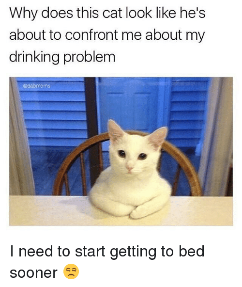 Cat Look: Why does this cat look like he's  about to confront me about my  drinking problem  adab moms I need to start getting to bed sooner 😒