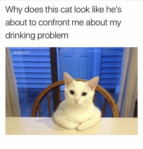 Cat Look: Why does this cat look like he's  about to confront me about my  drinking problem  @dabmoms