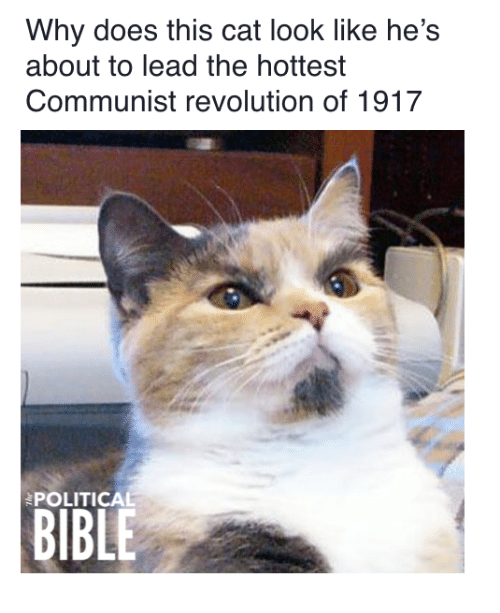 Cat Look: Why does this cat look like he's  about to lead the hottest  Communist revolution of 1917  POLITICAL  BIBLE