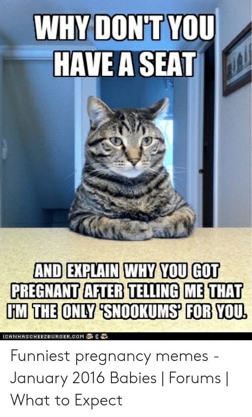 """Funny Pregnancy Memes: WHY DON'T YOU  HAVE A SEAT  AND EXPLAIN WHY YOU GOT  PREGNANT AFTER TELLING ME THAT  M THE ONLY """"SNOOKUMS FOR YOU  ICANHAS CHEEZBURGER"""" COM """"$導 Funniest pregnancy memes - January 2016 Babies   Forums   What to Expect"""