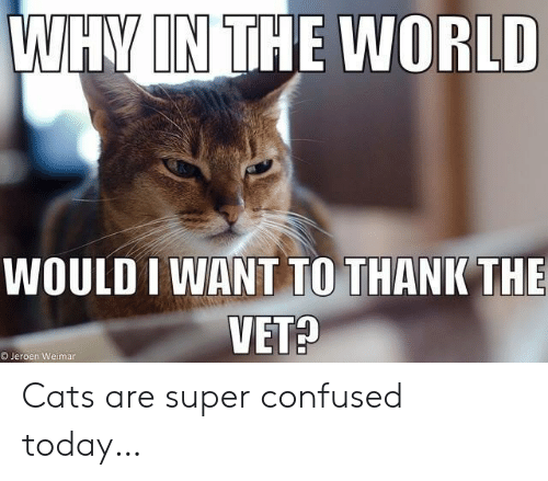 Cats, Confused, and Today: WHY IN THE WORLD  WOULD I WANT TO THANK THE  VET?  OJeroen Weimar Cats are super confused today…