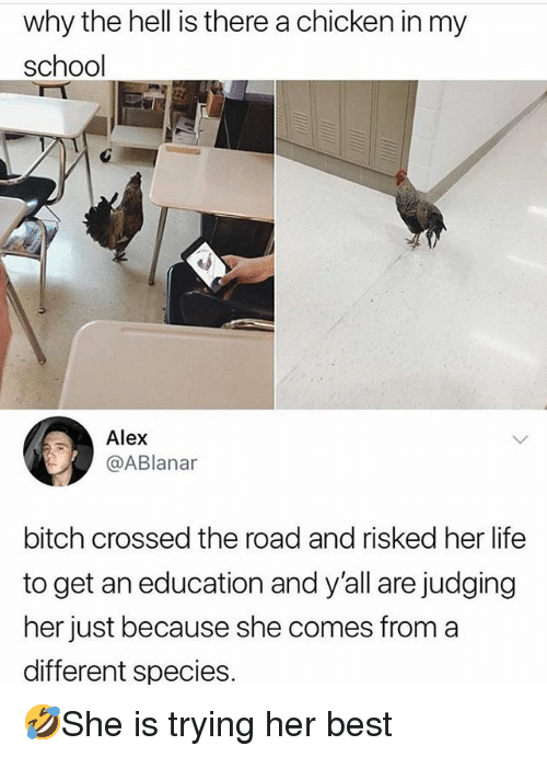 An Education: why the hell is there a chicken in my  school  Alex  @ABlanar  bitch crossed the road and risked her life  to get an education and y'all are judging  her just because she comes from a  different species 🤣She is trying her best