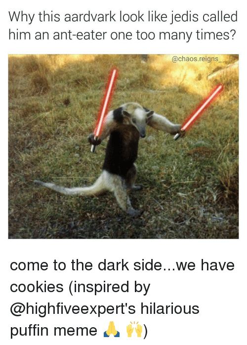 puffin: Why this aardvark look like jedis called  him an ant-eater one too many times?  @chaos reigns come to the dark side...we have cookies (inspired by @highfiveexpert's hilarious puffin meme 🙏 🙌)