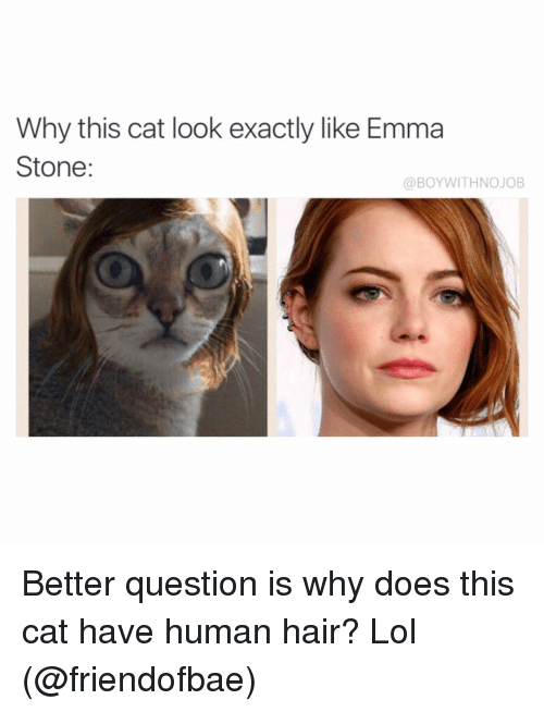 Cat Look: Why this cat look exactly like Emma  Stone  a BOYWITHNOJOB Better question is why does this cat have human hair? Lol (@friendofbae)