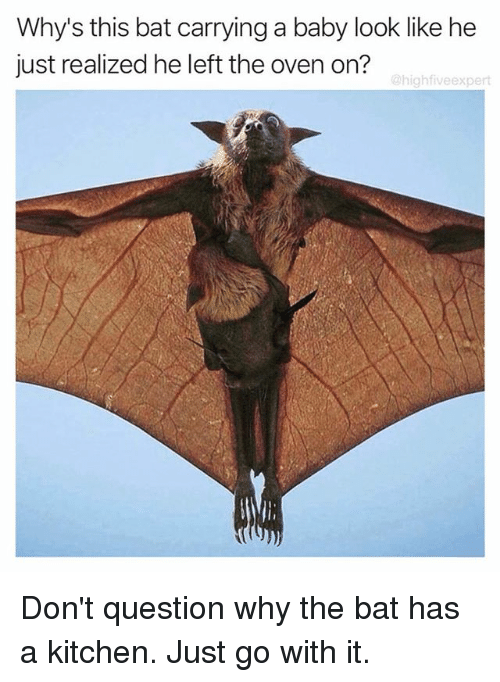 just go with it: Why's this bat carrying a baby look like he  just realized he left the oven on?  @highfiveexpert Don't question why the bat has a kitchen. Just go with it.