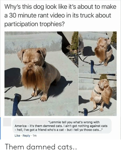 "trophies: Why's this dog look like it's about to make  a 30 minute rant video in its truck about  participation trophies?  ""Lemmie tell you what's wrong with  America - it's them damned cats. I ain't got nothing against cats  - hell, I've got a friend who's a cat - but I tell ya those cats...""  Like · Reply · 1m Them damned cats.."