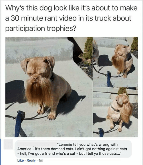 "trophies: Why's this dog look like it's about to make  a 30 minute rant video in its truck about  participation trophies?  ""Lemmie tell you what's wrong with  America - it's them damned cats. I ain't got nothing against cats  - hell, I've got a friend who's a cat - but I tell ya those cats...""  Like · Reply · 1m"