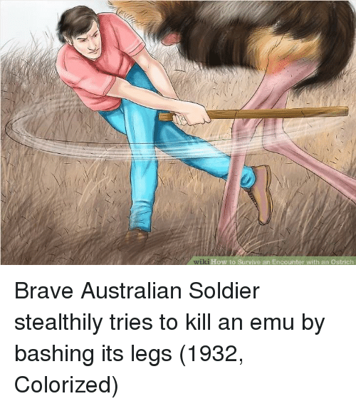 Brave, How To, and Wiki: wiki  ki How to Survive an Encounter with an Ostrich Brave Australian Soldier stealthily tries to kill an emu by bashing its legs (1932, Colorized)
