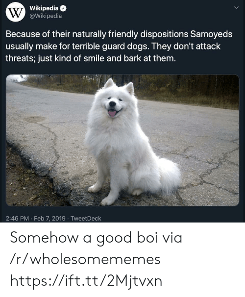 tweetdeck: Wikipedia  W@Wikipedia  Because of their naturally friendly dispositions Samoyeds  usually make for terrible guard dogs. They don't attack  threats; just kind of smile and bark at them.  2:46 PM Feb 7, 2019 TweetDeck Somehow a good boi via /r/wholesomememes https://ift.tt/2Mjtvxn