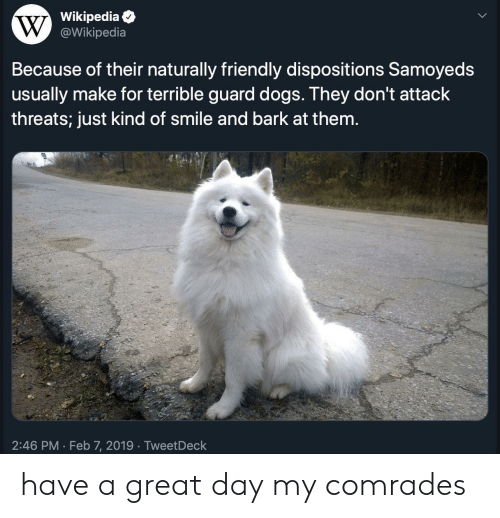 Dogs, Wikipedia, and Smile: Wikipedia  @Wikipedia  Because of their naturally friendly dispositions Samoyeds  usually make for terrible guard dogs. They don't attack  threats; just kind of smile and bark at them.  2:46 PM Feb 7, 2019 TweetDeck  . have a great day my comrades