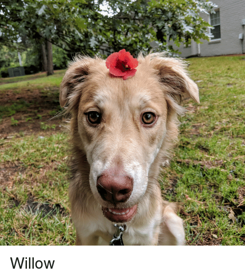 Flower and Willow: Willow