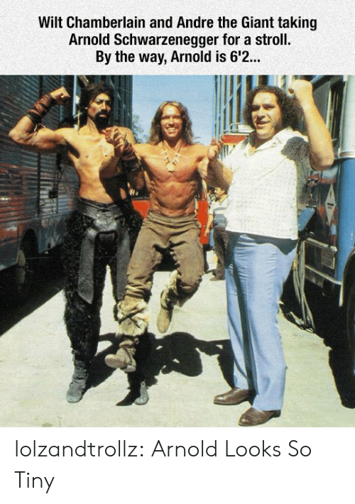 André the Giant, Arnold Schwarzenegger, and Tumblr: Wilt Chamberlain and Andre the Giant taking  Arnold Schwarzenegger for a stroll.  By the way, Arnold is 6'2... lolzandtrollz:  Arnold Looks So Tiny