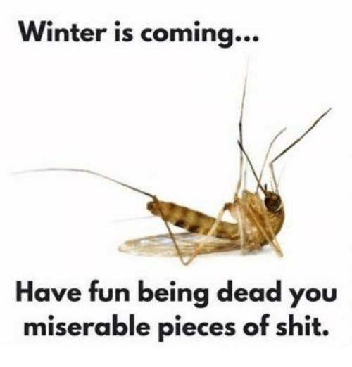 Winter, Mexican Word of the Day, and Piece of Shit: Winter is coming...  Have fun being dead you  miserable pieces of shit.