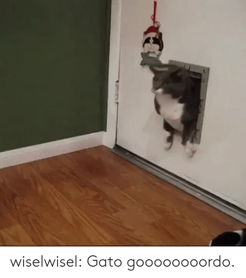 Tumblr, Blog, and Com: wiselwisel:  Gato goooooooordo.