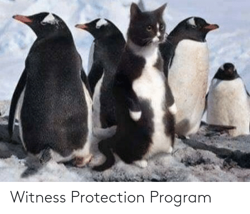 program: Witness Protection Program