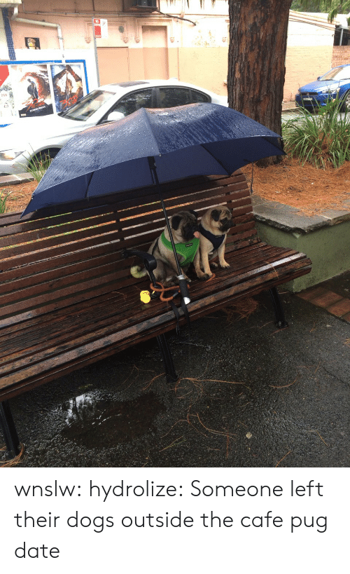 Dogs, Target, and Tumblr: wnslw:  hydrolize:  Someone left their dogs outside the cafe  pug date