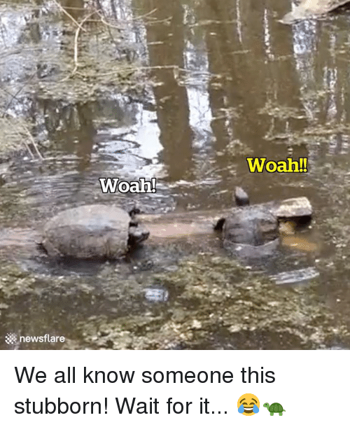 All, For, and This: Woah!  Woah!  newsflare We all know someone this stubborn! Wait for it... 😂🐢