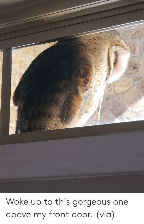 Gorgeous: Woke up to this gorgeous one above my front door. (via)