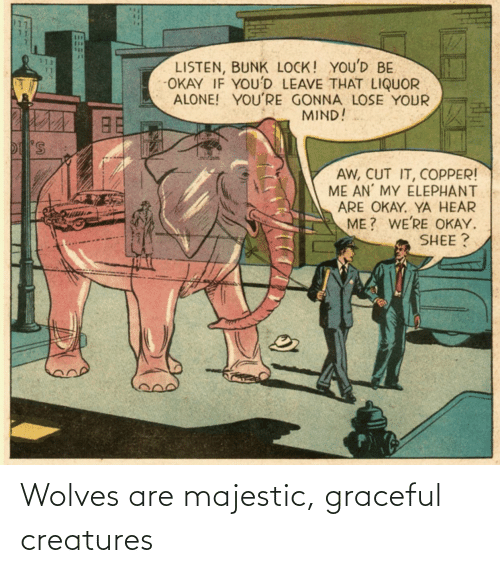 Wolves: Wolves are majestic, graceful creatures