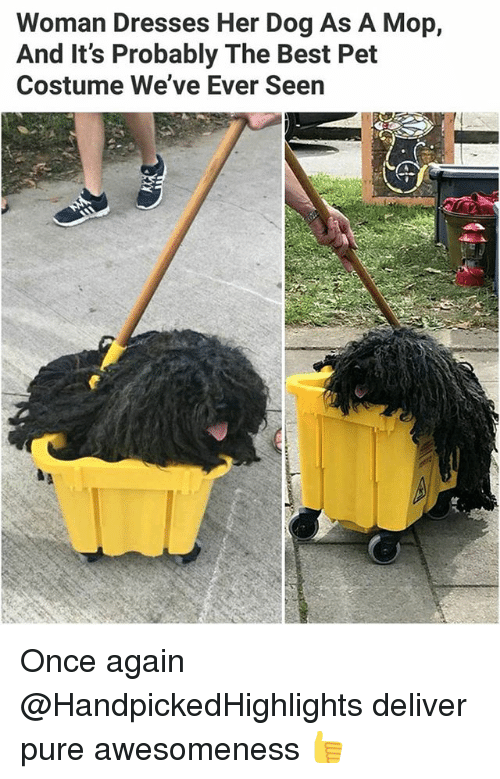 Awesomeness: Woman Dresses Her Dog As A Mop,  And It's Probably The Best Pet  Costume We've Ever Seen Once again @HandpickedHighlights deliver pure awesomeness 👍