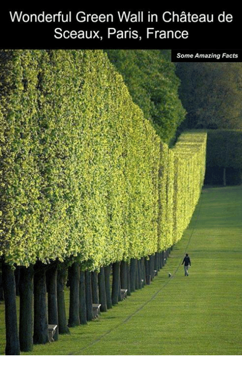 Amaz: Wonderful Green Wall in Chateau de  Sceaux, Paris, France  Some Amazing Facts