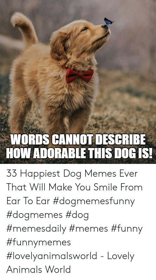 Animals, Funny, and Memes: WORDS CANNOT DESCRIBE  HOW ADORABLE THIS DOGIS 33 Happiest Dog Memes Ever That Will Make You Smile From Ear To Ear #dogmemesfunny #dogmemes #dog #memesdaily #memes #funny #funnymemes #lovelyanimalsworld - Lovely Animals World