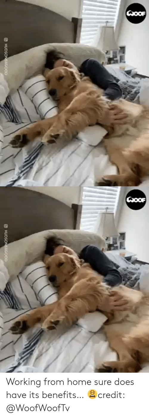 facebook.com: Working from home sure does have its benefits… 😩credit: @WoofWoofTv