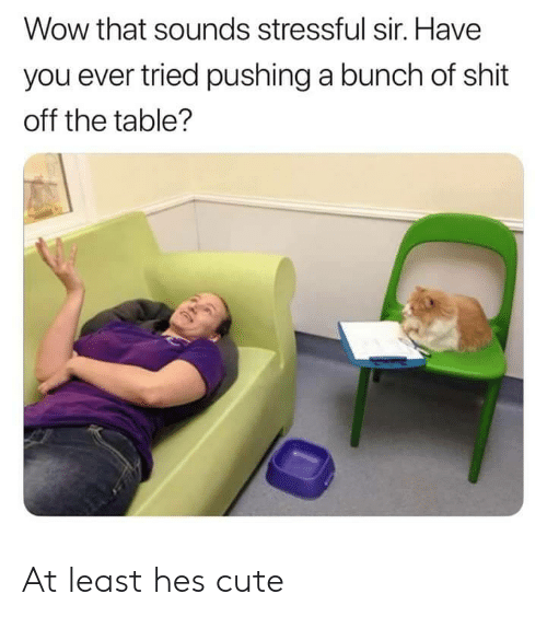 Cute, Shit, and Wow: Wow that sounds stressful sir. Have  you ever tried pushing a bunch of shit  off the table? At least hes cute