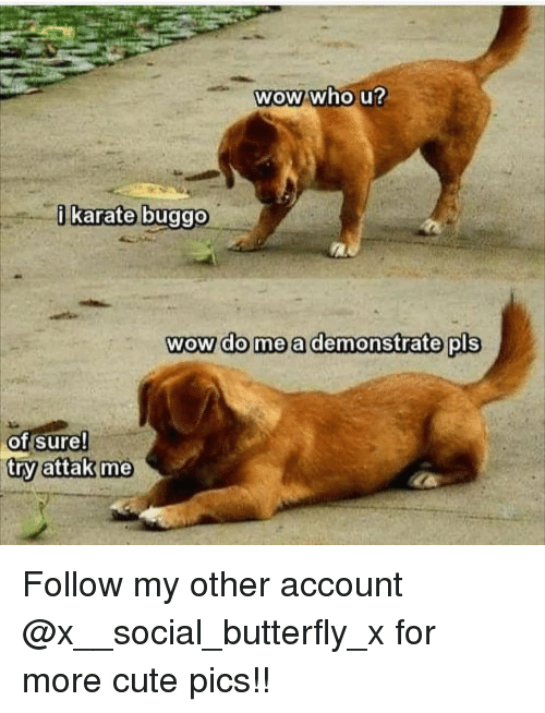 Cute, Memes, and Wow: WOW who U  karate buggo  wow do me a demonstrate pls  of sure!  try attak me Follow my other account @x__social_butterfly_x for more cute pics!!