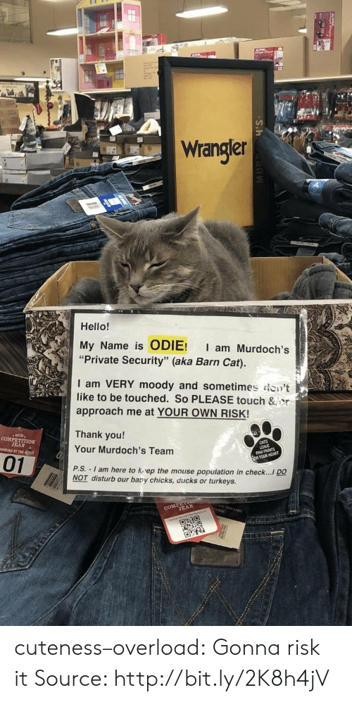 """odie: Wrangler  Hello!  My Name is ODIE! I am Murdoch's  """"Private Security"""" (aka Barn Cat).  I am VERY moody and sometimes don't  like to be touched. So PLEASE touch &jor  approach me at YOUR OWN RISK!  Thank you!  Your Murdoch's Team  P.S.  01  - I am here to kaep the mouse population in check.... DO  NOT disturb our baby chicks, ducks or turkeys.  CO TEAN cuteness–overload:  Gonna risk it Source: http://bit.ly/2K8h4jV"""