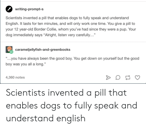 """collie: writing-prompt-s  Scientists invented a pill that enables dogs to fully speak and understand  English. It lasts for ten minutes, and will only work one time. You give a pill to  your 12 year-old Border Collie, whom you've had since they were a pup. Your  dog immediately says """"Alright, listen very carefully...""""  carameljellyfish-and-greenbooks  ...you have always been the good boy. You get down on yourself but the good  boy was you all a long.""""  4,360 notes Scientists invented a pill that enables dogs to fully speak and understand english"""