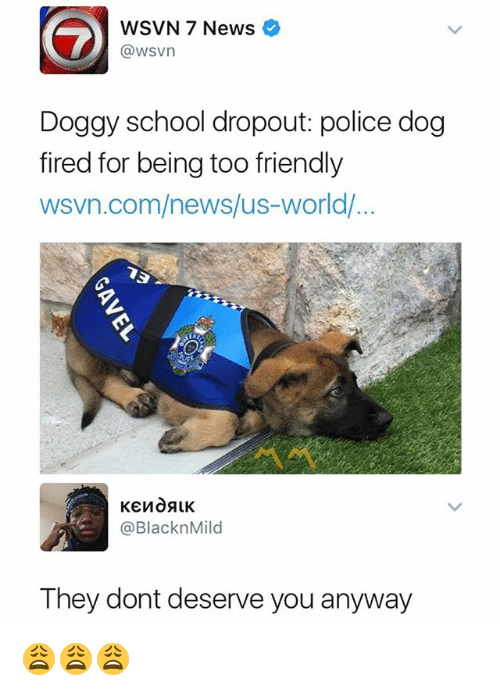 dogged: WSVN 7 News  @wsvn  Doggy school dropout: police dog  fired for being too friendly  wsvn.com/news/us-world/  @BlacknMild  They dont deserve you anyway 😩😩😩