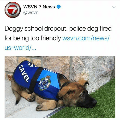 Memes, News, and Police: WSVN 7 News  @wsvn  Doggy school dropout: police dog fired  for being too friendly wsvn.com/news/  us-world/