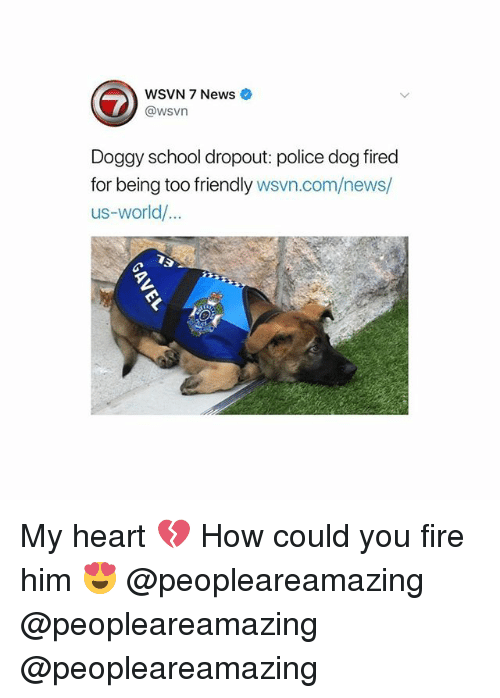 Fire, Memes, and News: WSVN 7 News  @wsvn  Doggy school dropout: police dog fired  for being too friendly wsvn.com/news/  us-world/... My heart 💔 How could you fire him 😍 @peopleareamazing @peopleareamazing @peopleareamazing
