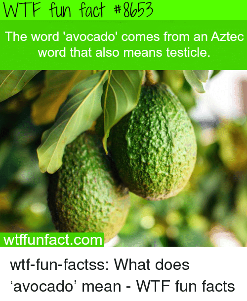 Facts, Tumblr, and Wtf: WTF fun fact #8653  The word 'avocado  ' comes from an Aztec  word that also means testicle  wtffunfact.com wtf-fun-factss:  What does 'avocado' mean - WTF fun facts