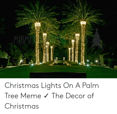 25 Best Memes About Christmas Lights On A Palm Tree