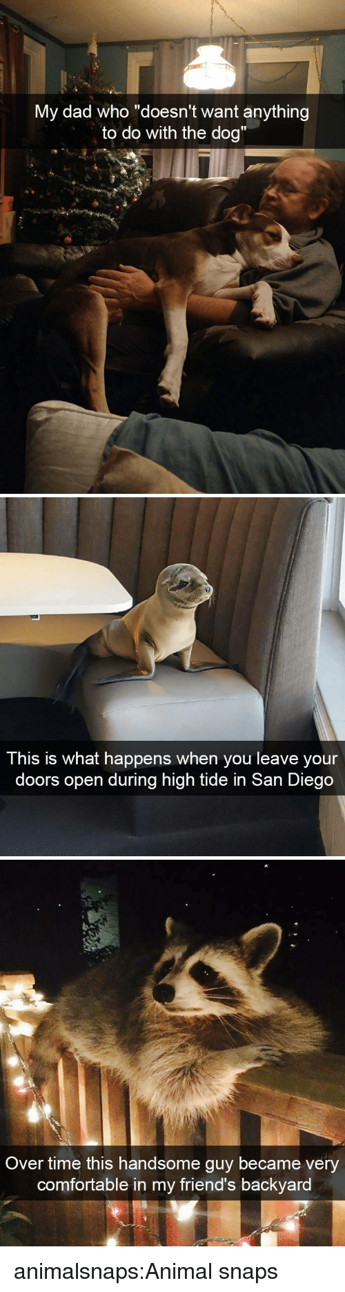 """Comfortable, Dad, and Friends: y dad who """"doesn't want anythin  to do with the dog""""  M  g   This is what happens when you leave your  doors open during high tide in San Diego   Over time this handsome guy became very  comfortable in my friend's backyard animalsnaps:Animal snaps"""