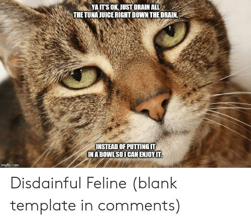 Juice, All The, and Blank: YA ITS OK, JUST DRAIN ALL  THE TUNA JUICE RIGHT DOWN THE DRAIN,  INSTEAD OF PUTTING IT  IN A BOWL SOI CAN ENJOY IT.  imgflip.com Disdainful Feline (blank template in comments)