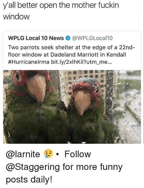 Fuckins: y'all better open the mother fuckin  window  WPLG Local 10 News@WPLGLocal10  Two parrots seek shelter at the edge of a 22nd  floor window at Dadeland Marriott in Kendall  #HurricaneIrma bit.ly/2xlhKil?utm-me.. @larnite 😢 • ➫➫➫ Follow @Staggering for more funny posts daily!