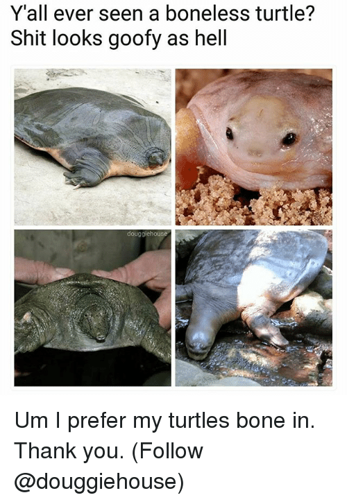 I Prefered: Y'all ever seen a boneless turtle?  Shit looks goofy as hell  douggiehouse Um I prefer my turtles bone in. Thank you. (Follow @douggiehouse)